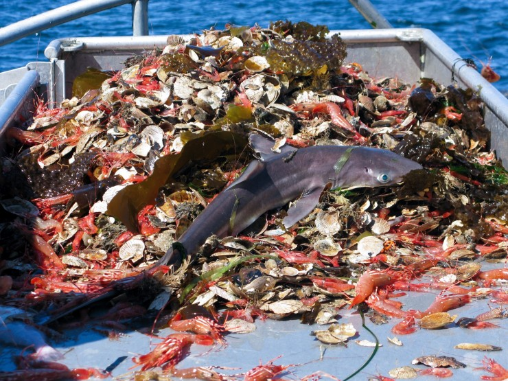 Image result for bycatch